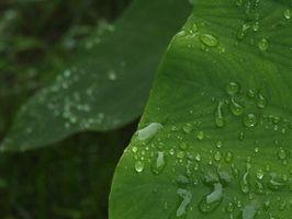 Planter, der vokser godt udendørs i Florida