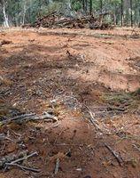 Virkningerne af Land Clearing