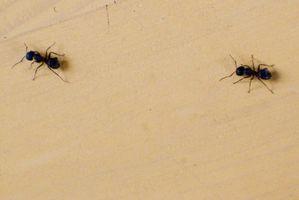 Hjem afhjælpe for drab myrer i gården