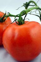 Hvorfor en tomat blomstrer & har ingen frugt