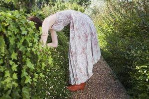 Hvordan at tilføje regnorme til din græsplæne