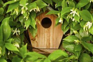 Birdhouse maleri ideer