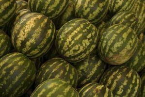 DIY Melon espalier