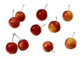 Hvor hurtigt Krabbe æbler vokse?