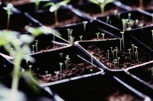 Jordens temperatur Versus frø spirer