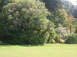 Herbicider at dræbe løvtræer