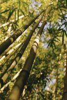 Hvad er bambus tæpper som?