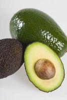 Hvor længe lever Avocado træet?