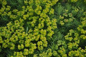 Hvordan hjælper DNA fingeraftryk planter?