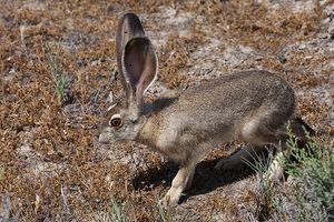 Hvad ville stoppe kaniner fra at spise din have grøntsager?