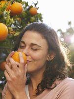 Citrus træ podning instruktioner