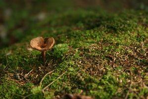 Hvordan til at dræbe svampe i terrarier