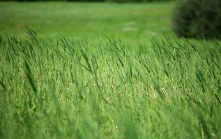 Hvordan man laver græs grøn naturligt