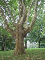 Værktøjer til at trimme træer
