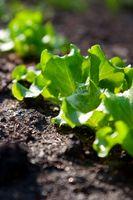 Hvordan man opbygger organisk jord til højbede