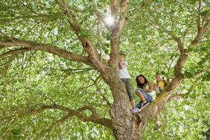 Hvordan man kan skære grene til at vokse et nyt træ