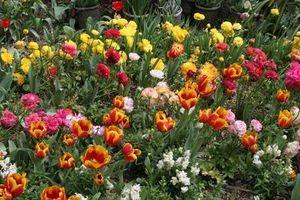 Den bedste ukrudtsbekæmpelse til blomsterbede