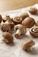 Ulemper ved voksende svampe indendørs