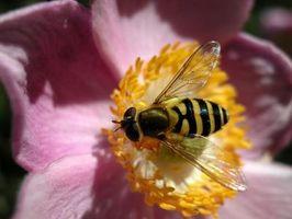 Hvordan man laver hjemmelavet haven Bug Spray