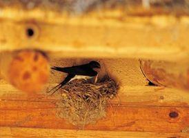 Hvordan man kan afskrække fugle fra Nesting nær dit hjem