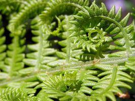Glas Terrarium planter