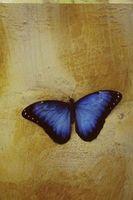 Sådan Paint sommerfugle i en piges værelse
