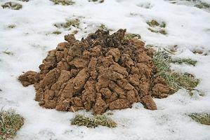 Jorden muldvarp behandling