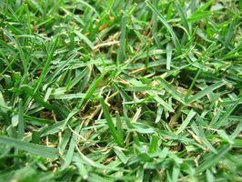 Hvordan at vokse nye græs med hø