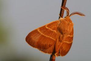 Hvordan til at dræbe flyvende insekter: myg, møl, Whiteflies