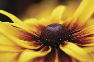 Sådan Decorate med brun & gul