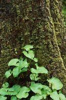 Hvordan til at fjerne mos fra træet lemmer