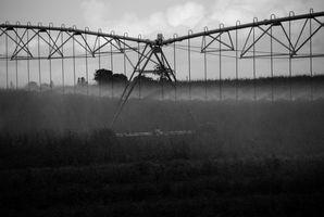 Af majs i forhold til korn Sorghum vandforbrug