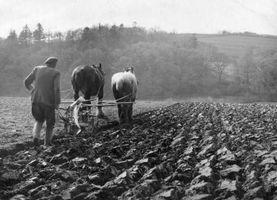 Hvordan til at pløje et felt uden en traktor