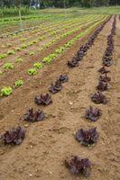 Hævet Vegetabilske havearbejde