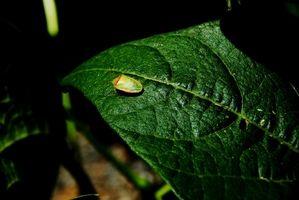 Grøn stank Bug Habitat