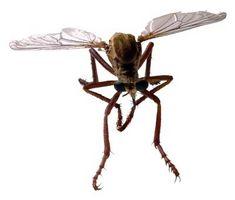 Bugs i Mississippi-deltaet