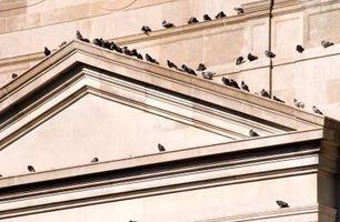 Hvordan til at frastøde duer