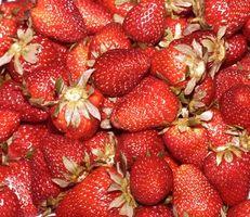 Sikker insekticid for myrer i jordbær