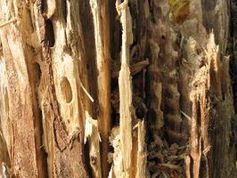 Sådan bruges borsyre syre når bygningen til at forhindre termitter
