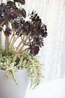 Hvordan at tilføje træ aske til potteplanter til at hæve pH-værdien