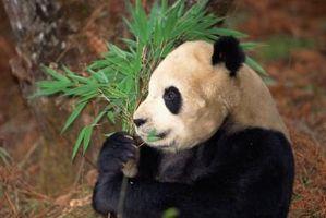 Om bambus stof