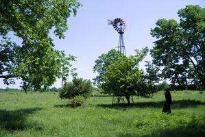 Indiana græsplæne & græs ukrudt