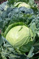 De bedste vegetabilske fødevarer for grøntsager