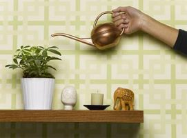 Hvordan man kan overføre potteplanter