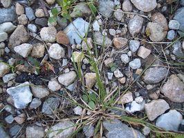 Finpudsede granit vs fedtsten