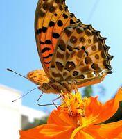 Typer af Orange årlige blomster