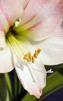 Vigtigste dele af en blomst