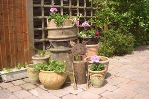 Hvad planter er gode for beholdere i Californien?