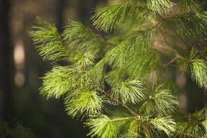Fyr kontrol insekticid for Bark biller