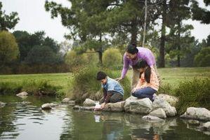 Hvordan til at rense små damme & springvand